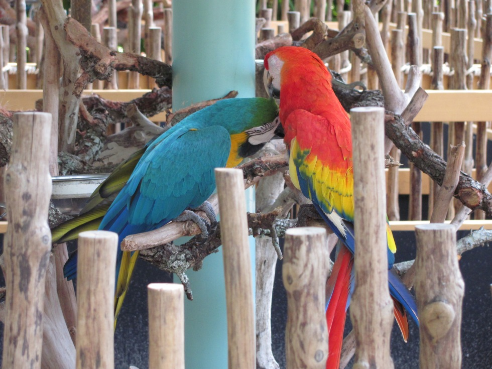 Love is in the air at Naples Zoo